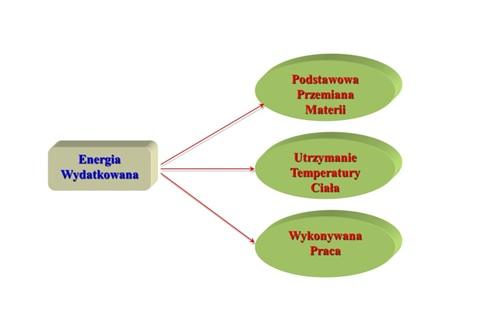 Diagram wydatkowania energii